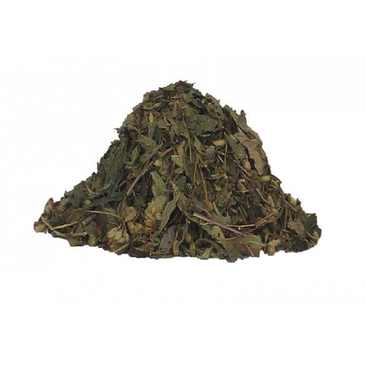 calea-zacatechichi-dream-herb.