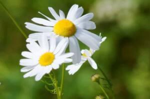 Homeopathy15