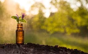 Homeopathy16