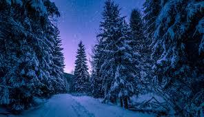 Winter Solstice12